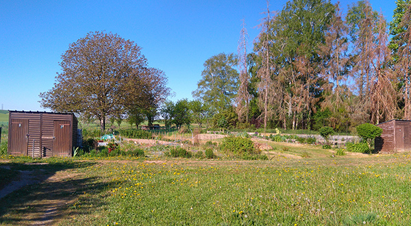 Jardins communaux à louer