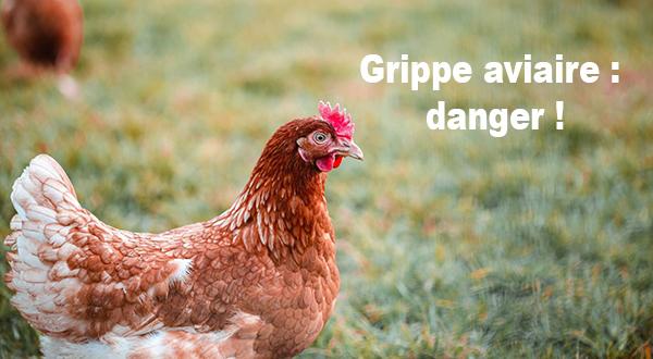 Grippe aviaire : danger !